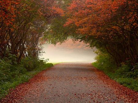 Осень – многоцветная царица… Волшебные фотопейзажи Ларса Ван де Гур — фото 11