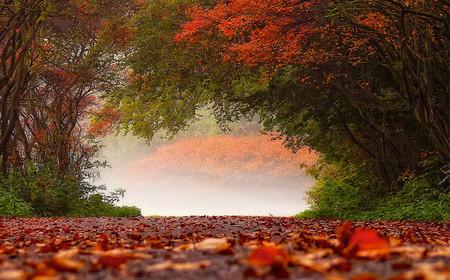 Осень – многоцветная царица… Волшебные фотопейзажи Ларса Ван де Гур — фото 7