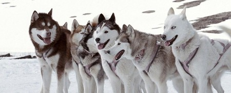 Они по-настоящему крутые — если можно так о собаках