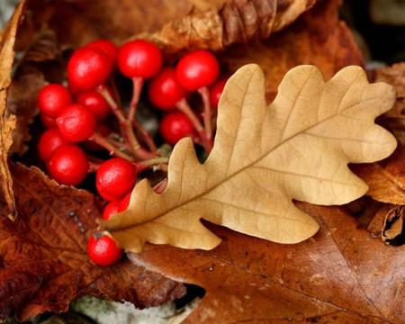 Осень умеет уходить красиво. 55 причин полюбить осень — фото 32