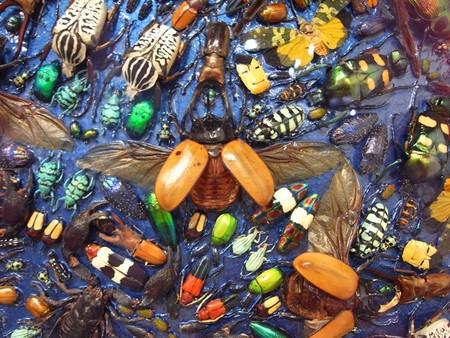 Capaneus – мозаика из маленьких красивых трупиков ) — фото 5