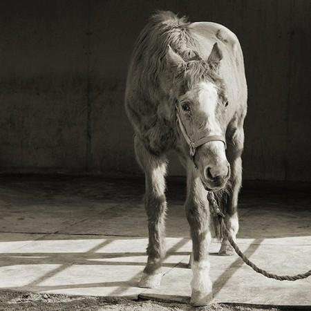 Фотографии пожилых животных от Исы Лешко — фото 7