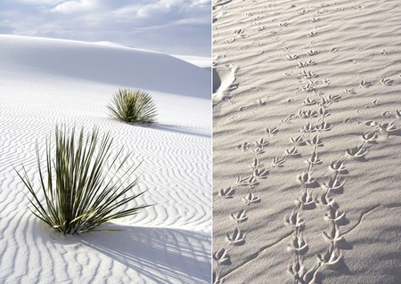 Белая жара в пустыне White Sands National Monument — фото 11