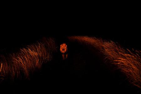 Ночные прогулки — опасные и интересные