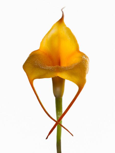Big Blooms – когда позируют цветы — фото 8