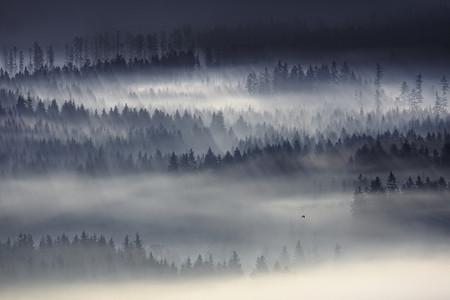 Туманные пейзажи на красивых снимках Богуслава Стремпеля — фото 20