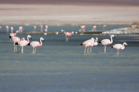 Фламинго — любители солененького )))