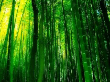 Япония, Киото, бамбуковая роща, красиво … — фото 4