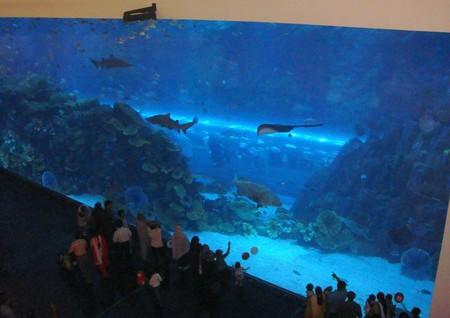 Сотни наименований рыб, невероятные цифры объемов и размеров