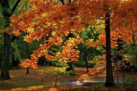 Осень умеет уходить красиво. 55 причин полюбить осень — фото 26