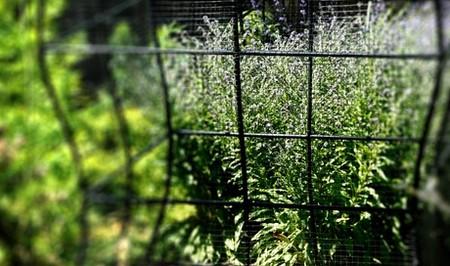 Есть здесь растения, которые ограждены решеткой