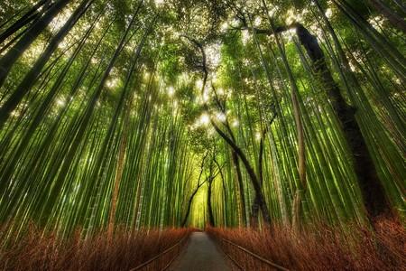 Япония, Киото, бамбуковая роща, красиво … — фото 19