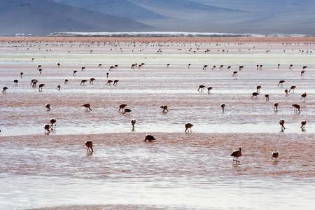 Уюни в Боливии – соляное озеро, соленый отель, фламинго и паровозы — фото 24