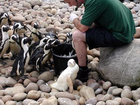 Белые люди и животные — фото 44