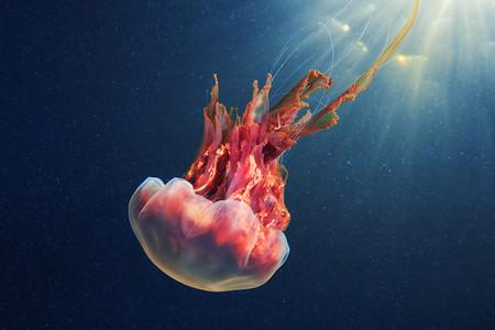 Подводные фотоэксперименты Александра Семенова — фото 29