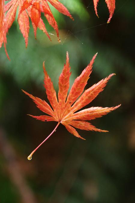 Осень умеет уходить красиво. 55 причин полюбить осень — фото 53