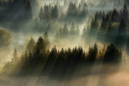 Туманные пейзажи на красивых снимках Богуслава Стремпеля — фото 13