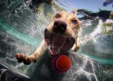Мокрые и смешные – фото ныряющих собак Сета Кастила — фото 7