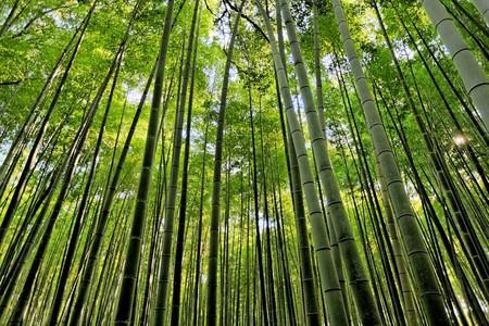 Япония, Киото, бамбуковая роща, красиво … — фото 13