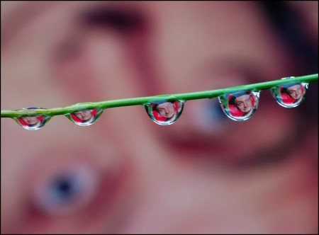 Целый мир внутри капли – фотографии Стива Уолла — фото 17
