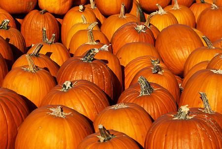 Тыквенный кастинг – фестиваль в Серклвилле. Американцы готовятся к Хэллоуину! — фото 7