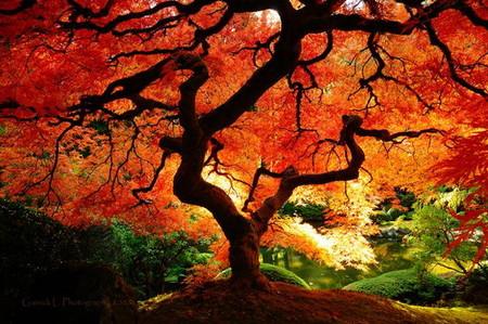 Осень умеет уходить красиво. 55 причин полюбить осень — фото 43