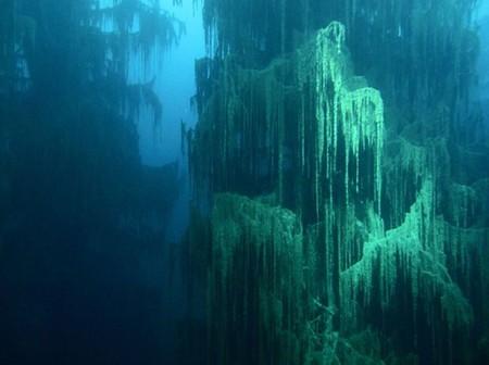 Подводные виды уникальны