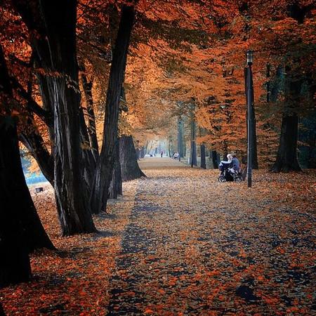 Осень умеет уходить красиво. 55 причин полюбить осень — фото 11