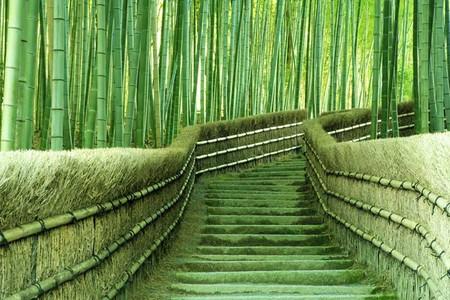 Япония, Киото, бамбуковая роща, красиво … — фото 25