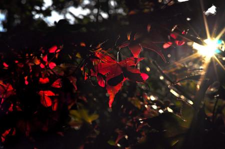 Осень умеет уходить красиво. 55 причин полюбить осень — фото 45