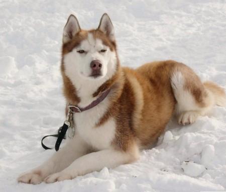 «Белый плен» - история о дружбе, совести и выживании. О собаках. — фото 11