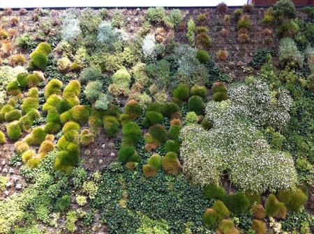 Вертикальный сад – рекордсмен — фото 11