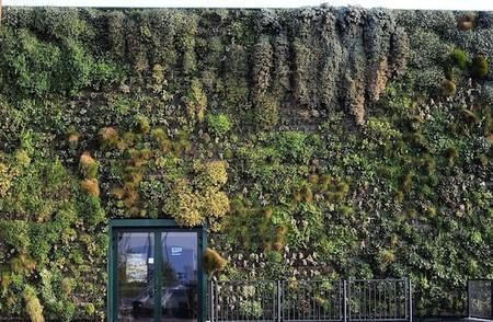 Вертикальный сад – рекордсмен — фото 5