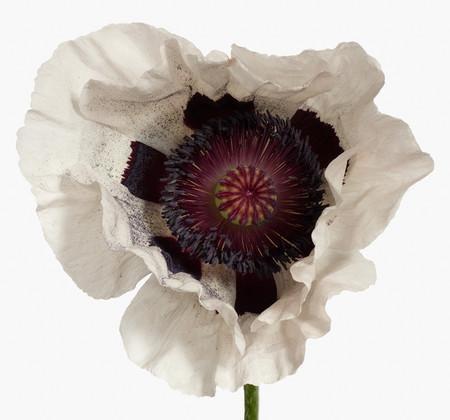 Big Blooms – когда позируют цветы — фото 3