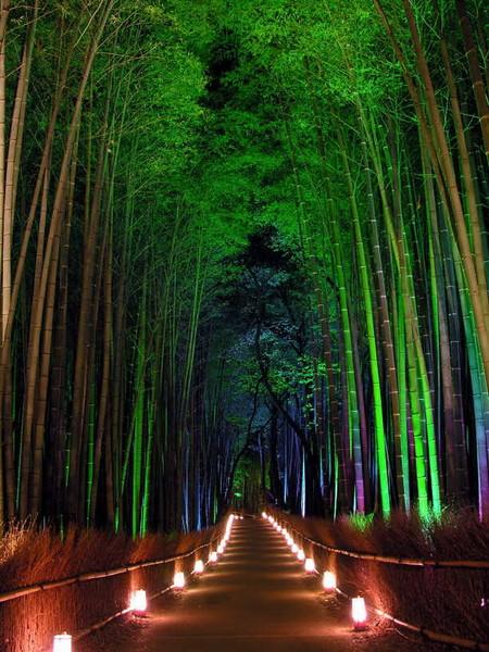 Вечером, с подсветкой, бамбук становится разноцветным