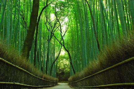 Япония, Киото, бамбуковая роща, красиво … — фото 23