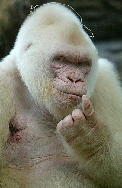 Белые люди и животные — фото 27