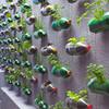 Вертикальные сады-огороды в бутылках