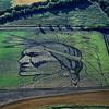 Поле – холст, трактор – кисть. Полевая живопись Стэна Херда (Stan Herd)