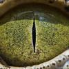Глаза людей и животных – макроснимки Сурена Манвеляна