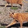 Что такое котопейнт, или «Раскрась кота!»