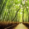 Япония, Киото, бамбуковая роща, красиво …