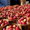Apple Day в Англии – большой праздник здоровья для любителей яблок