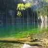 Волшебное озеро Каинды в Казахстане