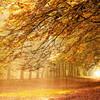 Осень – многоцветная царица… Волшебные фотопейзажи Ларса Ван де Гур