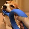 Q-Ring – для красивой собачьей улыбки