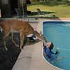 Фотопроект Amelia's world – животные в мире одной девочки