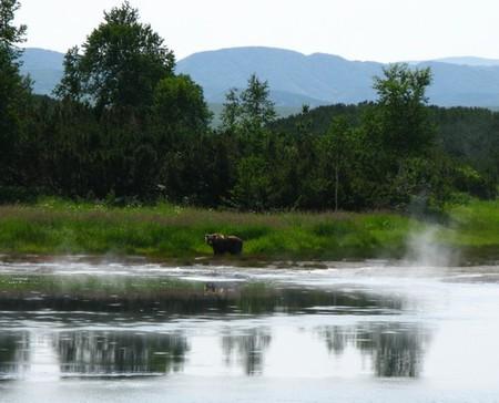 Мишка пришел полечиться у горячего озера с непростым химическим составом.