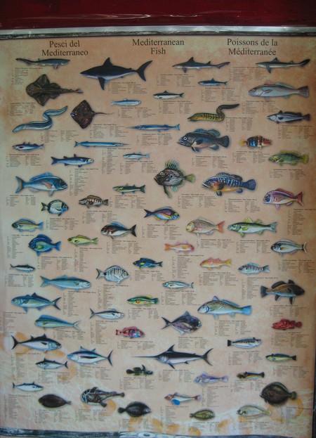 Разнообразие рыбного мира Атлантики (на плакате в прибрежном кафе)