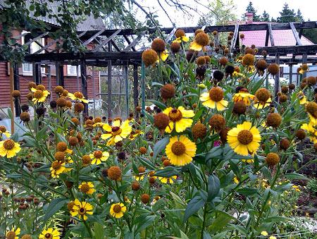 И даже желтые цветы продолжают с грустью желтеть